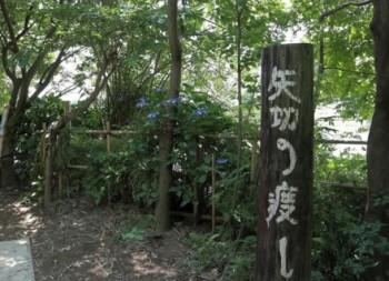 矢切の渡し(松戸市/渡し船)