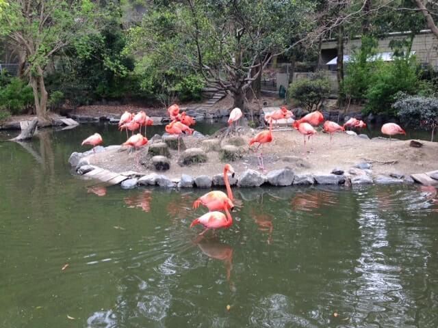東山動植物園(名古屋市千種区)
