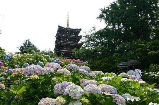 本土寺(千葉県松戸市/観光)