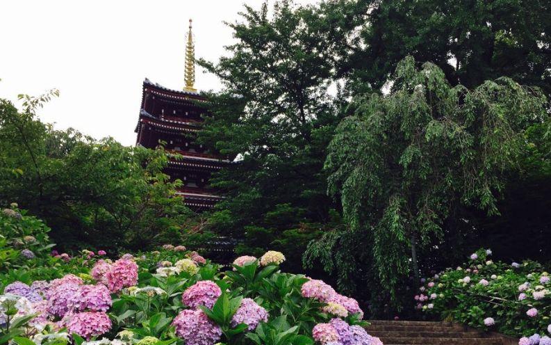 アジサイ寺(千葉県松戸市/観光)