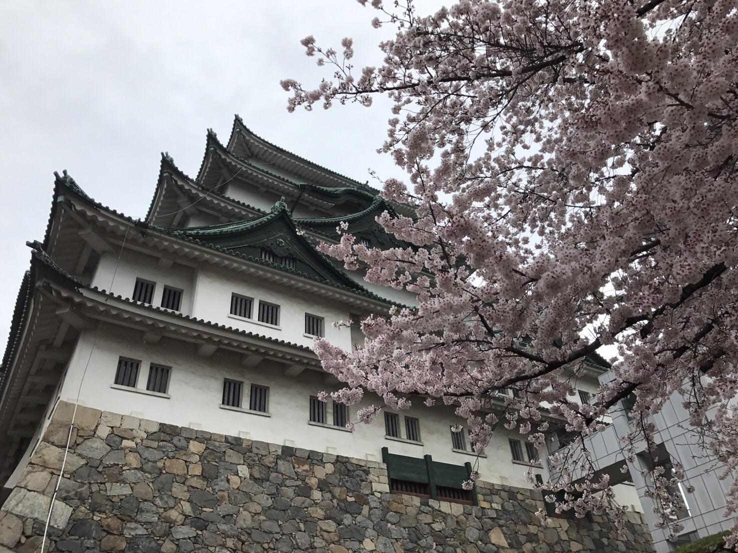 名古屋城名城桜まつり(名古屋市役所駅/城)