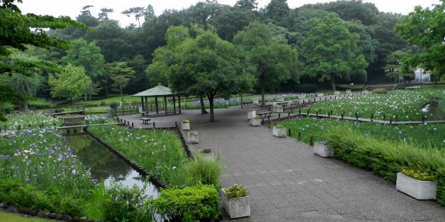千葉県/水生植物園「花菖蒲」