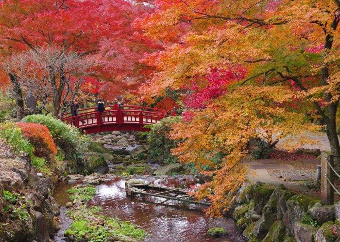 日本一が付く紅葉を♪熱海梅園( 静岡県熱海市)