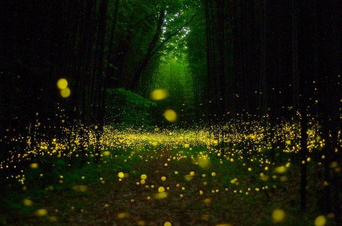 夏になると現れる一瞬の光を見に行こう(伊豆天城温泉郷)