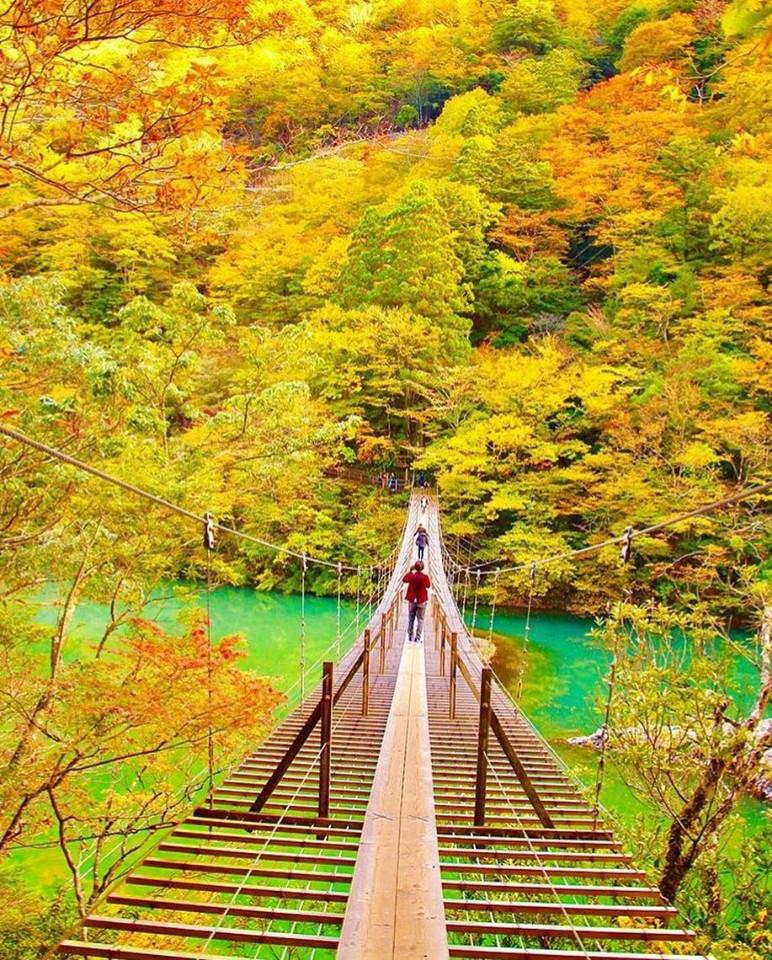 死ぬまでに行きたい吊橋(静岡県川根本町)