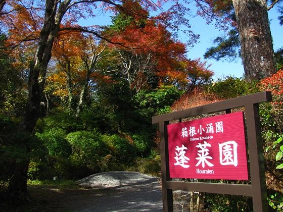 箱根で湯けむり紅葉を楽しもう(神奈川県箱根)