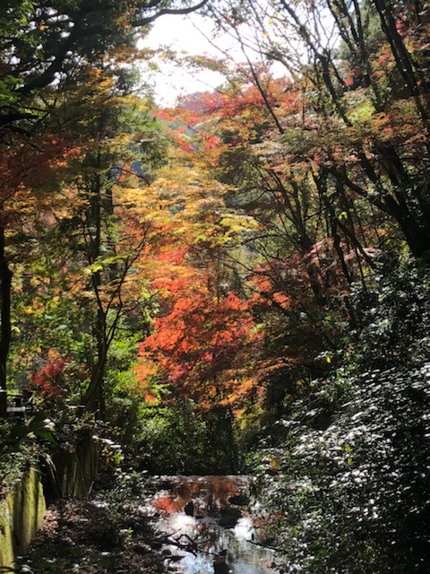 岩屋堂(瀬戸)の紅葉を見に行ってきた。