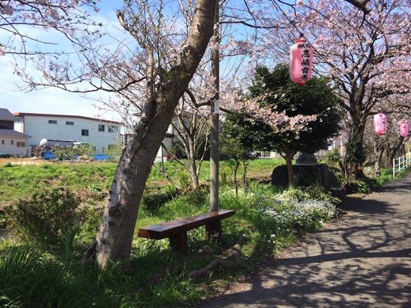 ドライブ花見!富士→沼津(富士市)