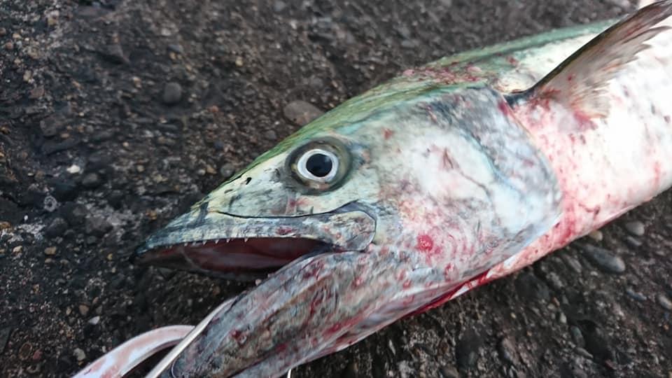 千葉県は釣りのメッカ 釣り施設・堤防・沖堤防(館山湾)