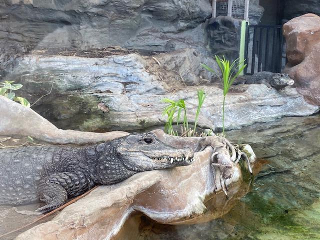 【千葉北店】上野動物園