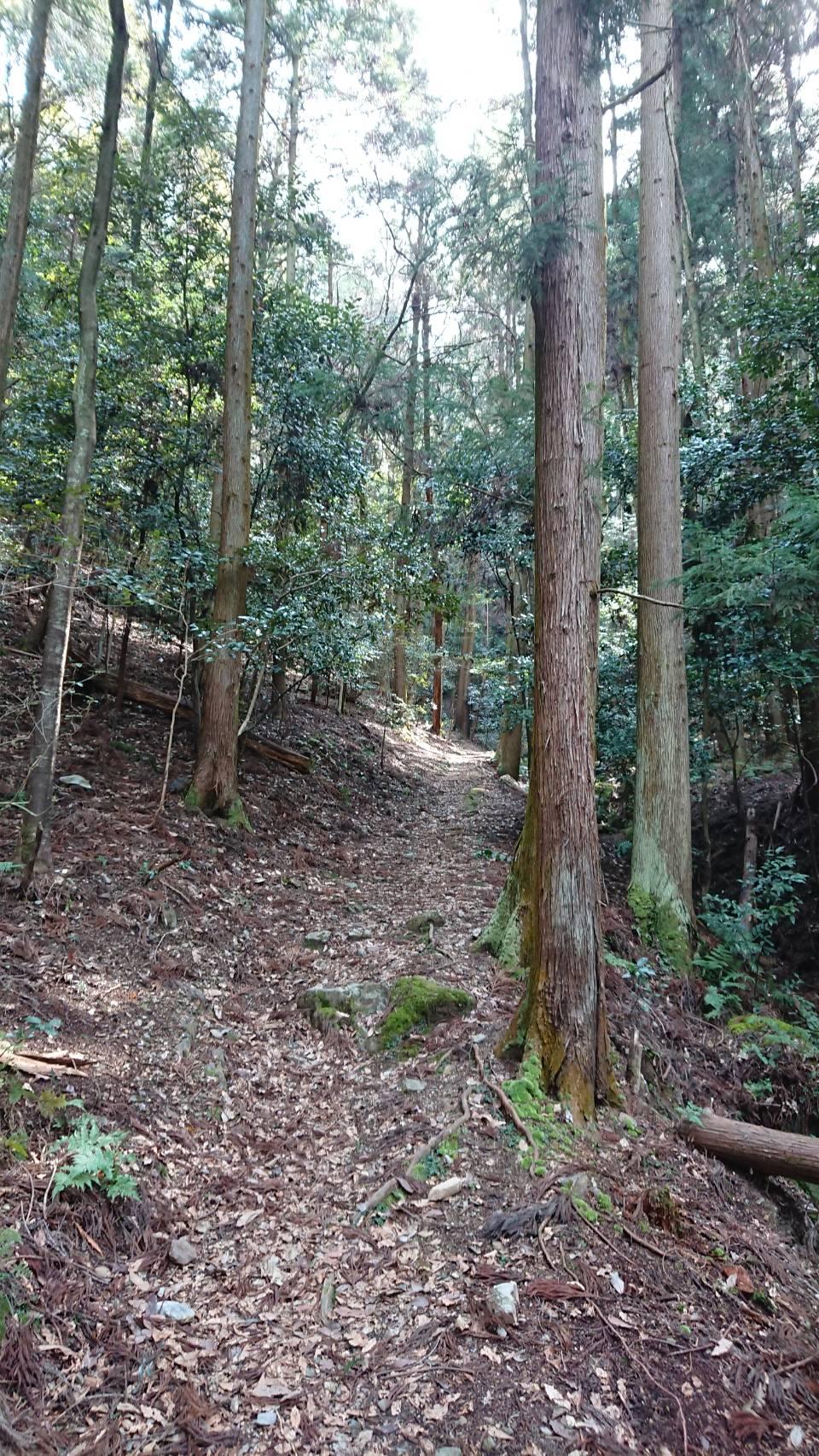 【枚方店】京都市伏見区日野の山奥まで散歩に行ってきました。(