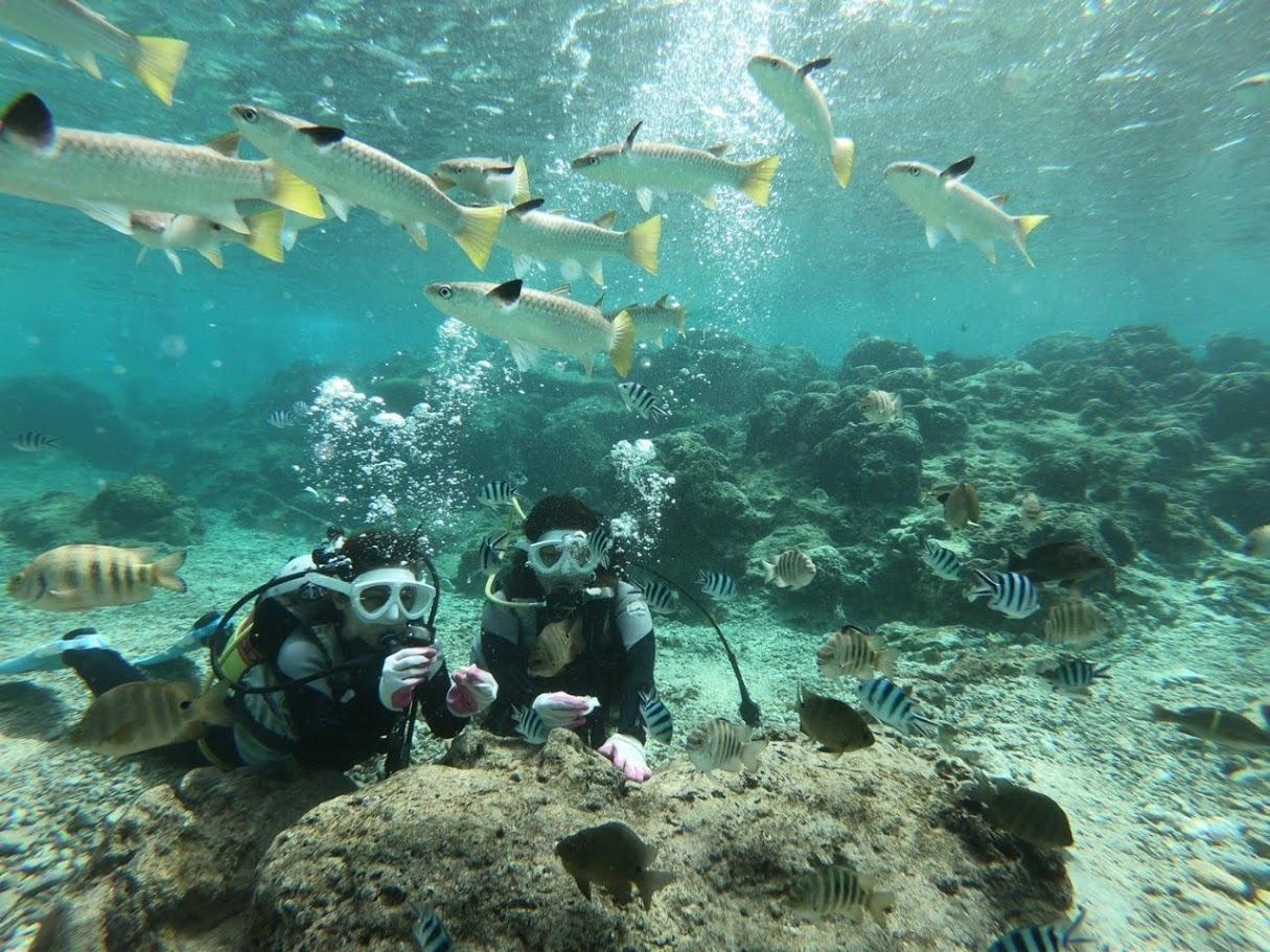 【那覇空港店】ダイビングショップなごみ 珊瑚礁