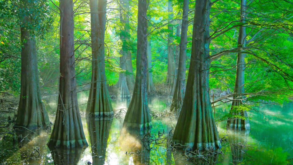 【福岡博多店】ジブリの世界へようこそ 【九大の森】