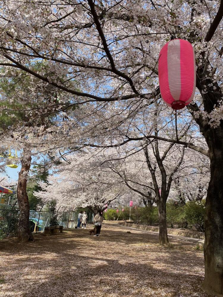 【新前橋駅前店】伊勢崎市 華蔵寺公園遊園地