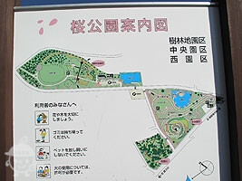 【富士店】桜公園IN御殿場
