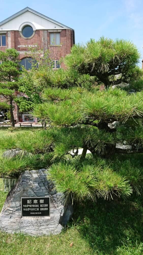 【枚方店】洲本市民広場にある記念樹(淡路市)